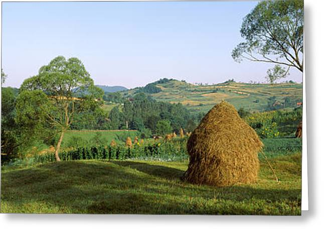 Romania Greeting Cards - Haystack At The Hillside, Transylvania Greeting Card by Panoramic Images