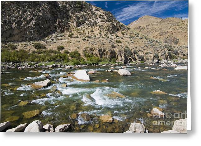 Salmon River Idaho Greeting Cards - Haystack Rapids Greeting Card by William H. Mullins