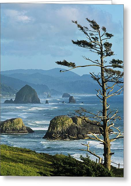 Haystack Rock Viewed From Ecola Point Greeting Card by Robert L. Potts
