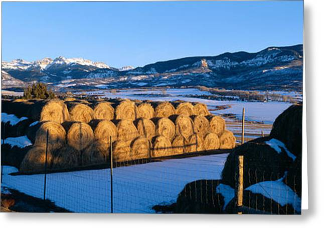 Plantlife Greeting Cards - Haystacks And Cimarron Mountains Greeting Card by Panoramic Images