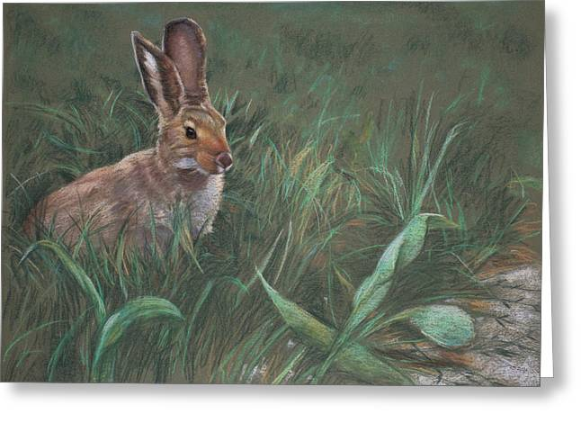 Rabbit Greeting Cards - Hazel Greeting Card by Christopher Reid