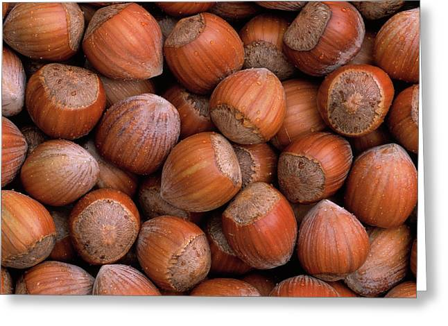 Filbert Greeting Cards - Hazelnuts Greeting Card by Duncan Usher