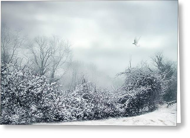 Fog Mist Greeting Cards - Hazy Shade of Winter Greeting Card by Jessica Jenney