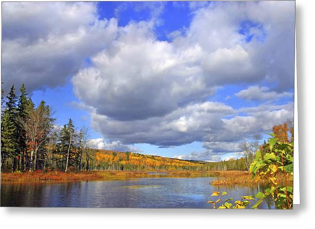 Mud Season Greeting Cards - HDR Autumn Forest Lake Greeting Card by Jamie Roach