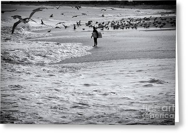 Buy Sell Photo Greeting Cards - HDR Black White BW Beach Ocean Seascape Birds Seagulls Photography Photo Picture Surfer Art Gallery  Greeting Card by Pictures HDR