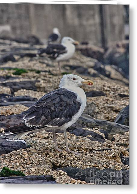 Surfing Photos Greeting Cards - HDR Seagulls Birds Beach Ocean Scenic Nature Nautical Photography Art Gallery Sale Buy Selling Image Greeting Card by Pictures HDR