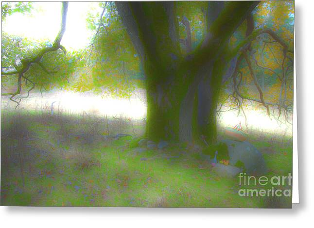Majic Greeting Cards - Hdr Tree Greeting Card by Graham Foulkes