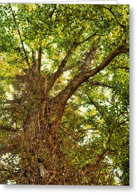 Vivid Colour Greeting Cards - Tree Roots Greeting Card by Wim Lanclus