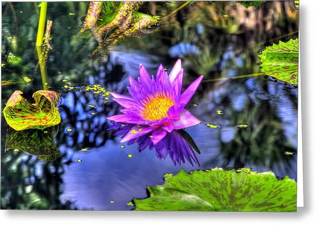 Myeress Greeting Cards - HDR Water Lily Greeting Card by Joe Myeress