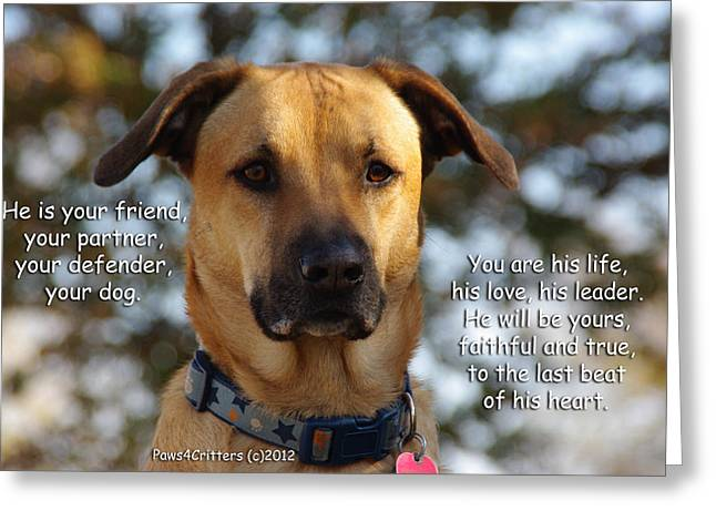 Paws4critters Photography Greeting Cards - He Is Your Friend You Are His Life Greeting Card by Robyn Stacey