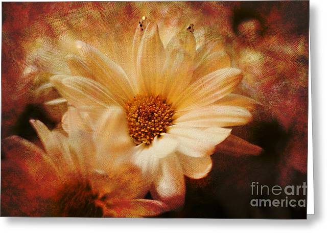 A New Focus Photography Greeting Cards - He Loves Me.... Greeting Card by A New Focus Photography