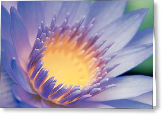 He Makana Nau Ke Aloha - Nymphaea Stellata - Star Lotus Greeting Card by Sharon Mau
