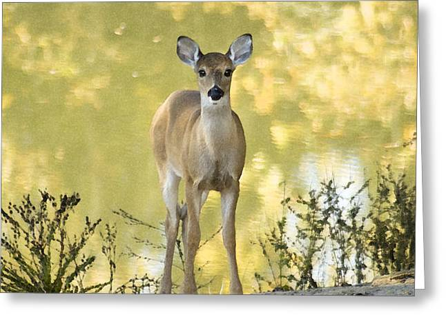 He Makes My Feet Like The Feet of Deer Greeting Card by Kathy Clark