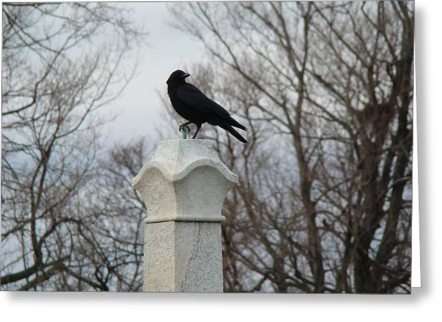Gothic Crows Greeting Cards - He Owns It Greeting Card by Gothicolors Donna Snyder