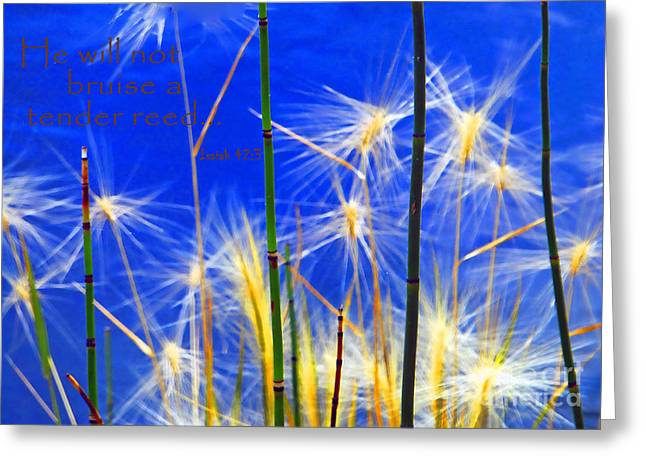 Isaiah Greeting Cards - He Will Not Bruise A Tender Reed Greeting Card by Renee Marie Martinez