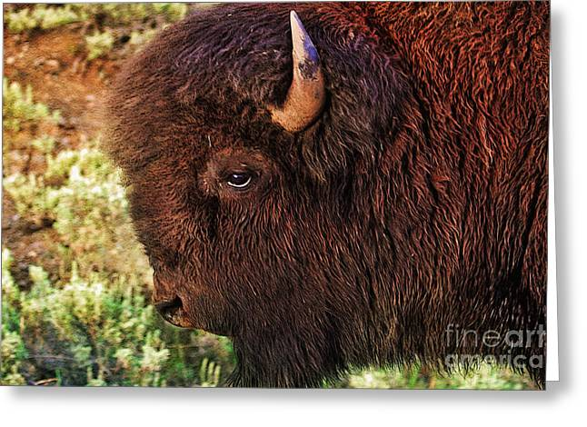 Woman Head Greeting Cards - Head of a Bison in Yellowstone Greeting Card by Janice Rae Pariza