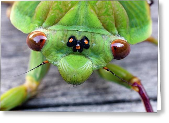 Head Of A Green Grocer Cicada Greeting Card by Dr Jeremy Burgess