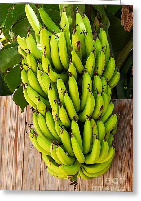 Agronomy Greeting Cards - Head of bananas Greeting Card by Luis Alvarenga