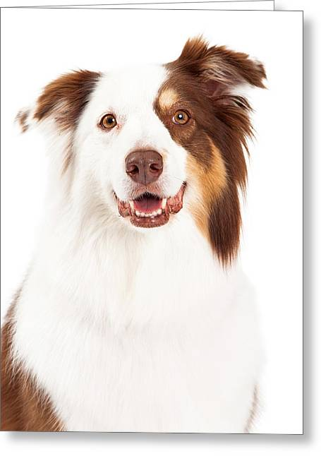 Herding Dogs Greeting Cards - Head Shot of Beautiful Border Collie Greeting Card by Susan  Schmitz