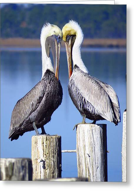 Wadingbird Greeting Cards - Head to head Greeting Card by Phyllis Beiser