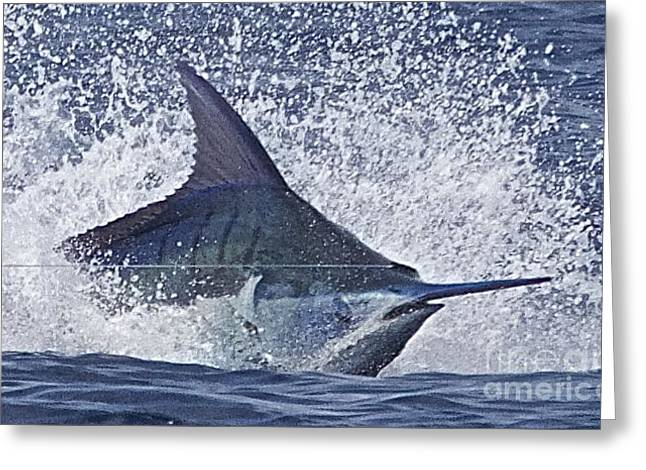 Ocean Images Drawings Greeting Cards - Heads Up Greeting Card by Carol Lynne