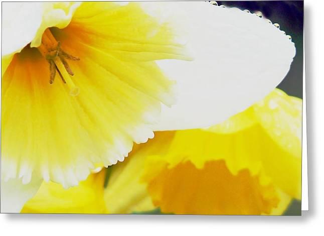 Solar Plexus Chakra Greeting Cards - Healing Daffodills Greeting Card by Pamela Patch