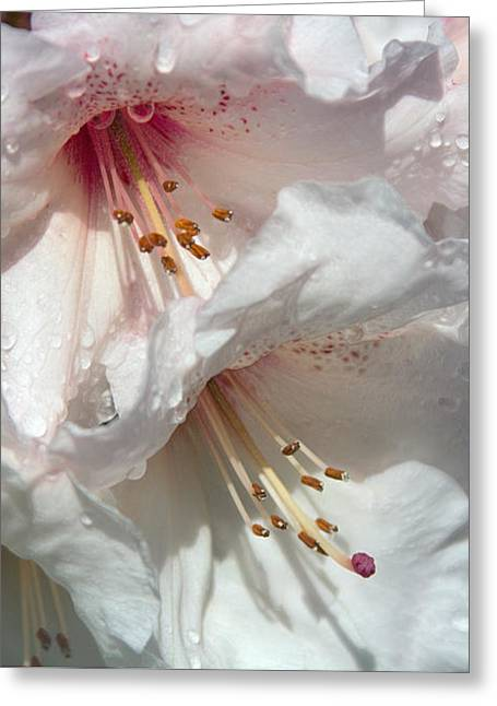 Healing Power Greeting Card by Jean OKeeffe Macro Abundance Art