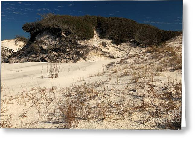 Pristine Beaches Greeting Cards - Healthy Dunes Greeting Card by Adam Jewell