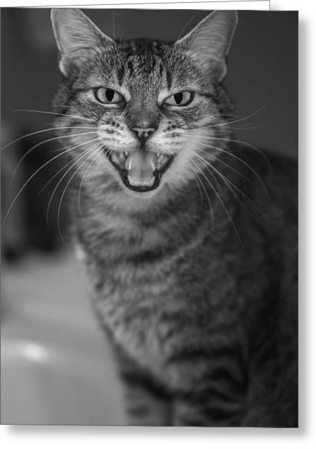 American Shorthair Greeting Cards - Hear Me Greeting Card by Anita Miller