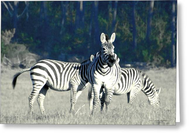 William Randolph Greeting Cards - Hearst Castle Zebra Hearst Ranch 2 Greeting Card by Barbara Snyder