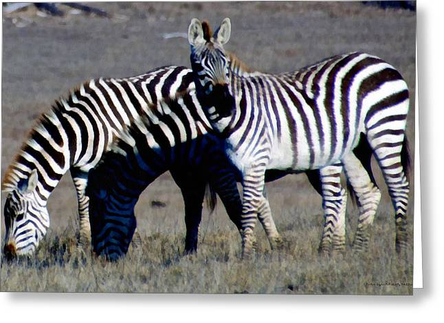 William Randolph Greeting Cards - Hearst Castle Zebra Hearst Ranch Greeting Card by Barbara Snyder