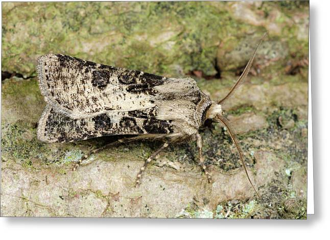 Heart And Club Moth Greeting Card by Nigel Downer