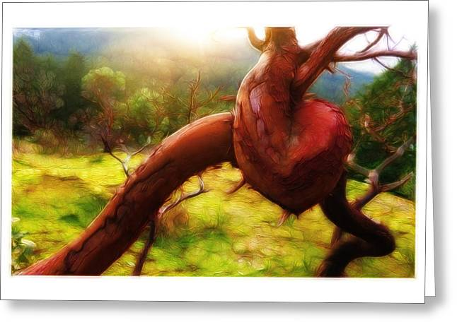Gnarly Greeting Cards - Heart Growth of an Arbutus Greeting Card by Sean Richardson