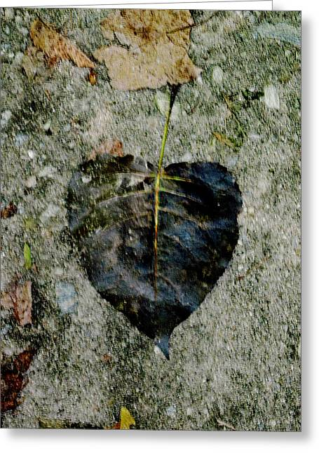 Autumn Photographs Paintings Greeting Cards - Heart Leaf Greeting Card by Michael Genova