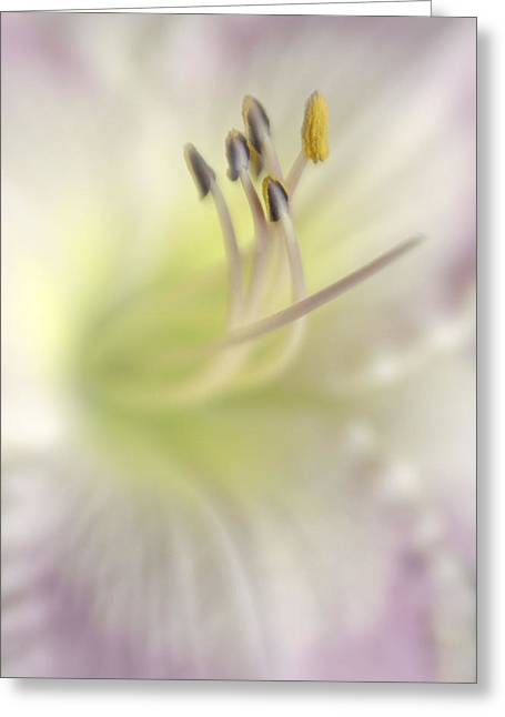 Day Lily Greeting Cards - Heart of a Day Lily Greeting Card by David and Carol Kelly