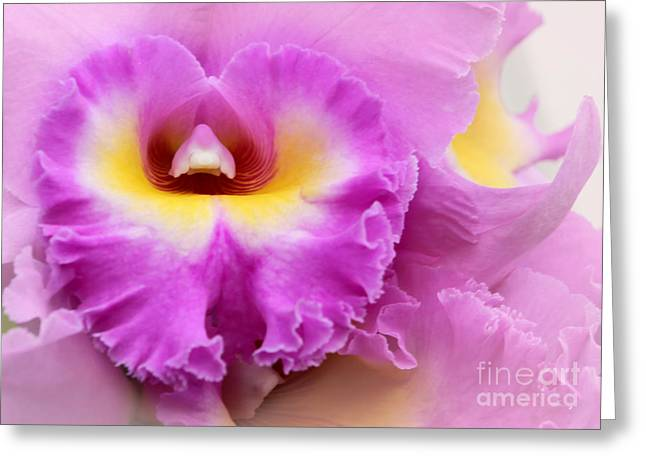 Florida Flowers Greeting Cards - Heart of a Frilly Pink Orchid Greeting Card by Sabrina L Ryan