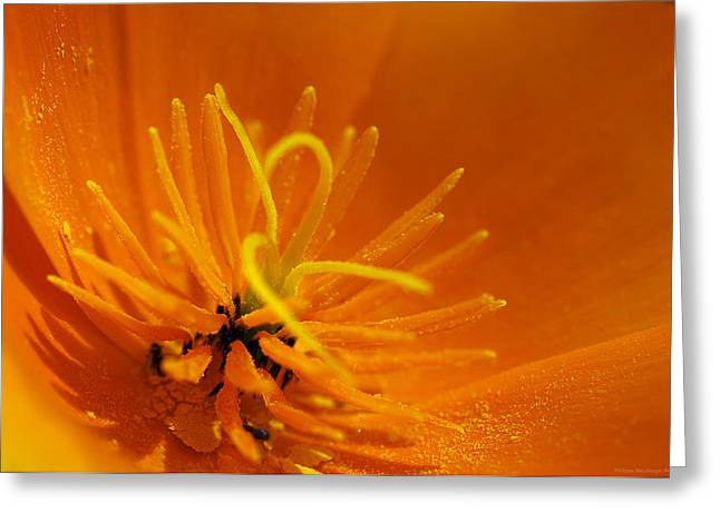 Haut-rhin Greeting Cards - Heart of gold Greeting Card by Philippe Meisburger