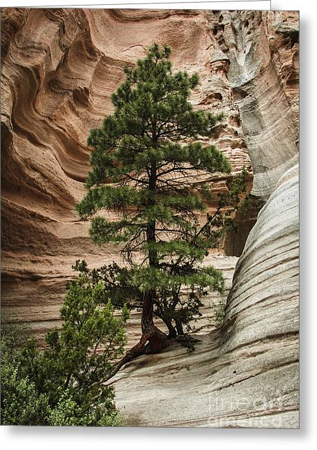 Tent Rocks Canyon Greeting Cards - Heart of the Canyon Greeting Card by Terry Rowe