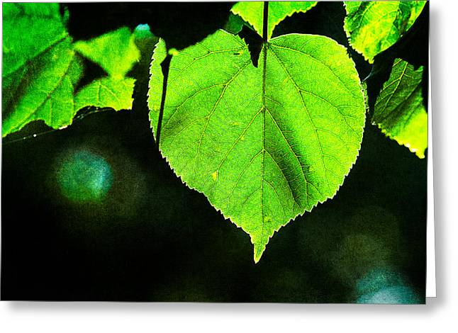 Heart Of The Forest - Green Greeting Card by Alexander Senin