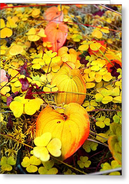 Faa Exclusive Greeting Cards - Heart of the forest Greeting Card by Irina Effa