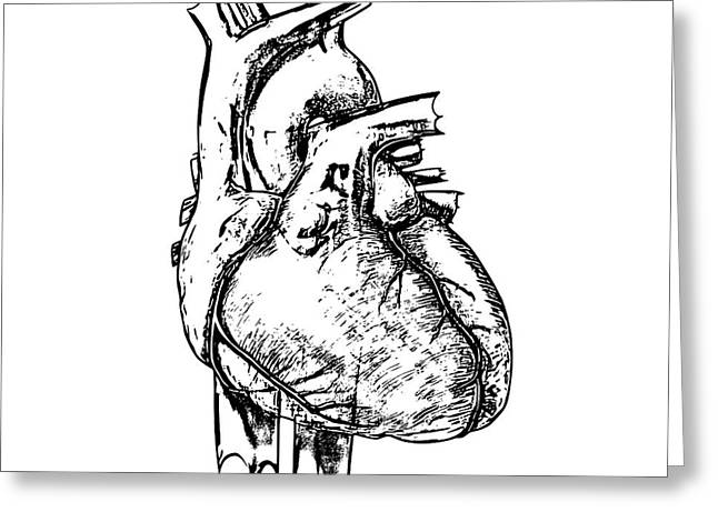 Heart Greeting Card by Russell Kightley