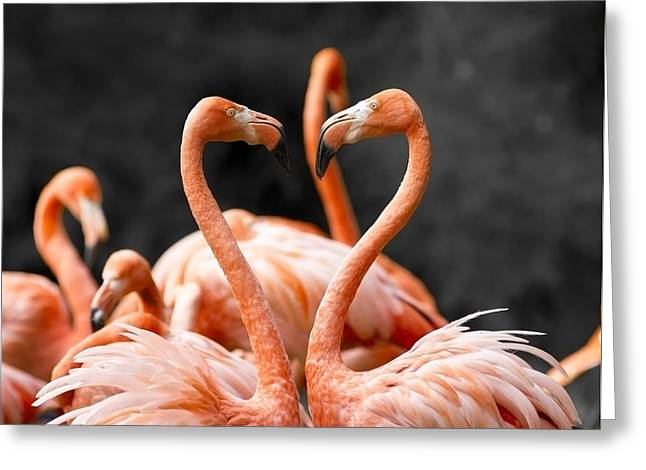 Animals Love Greeting Cards - Heart shaped lovers Greeting Card by Pascal Gerard