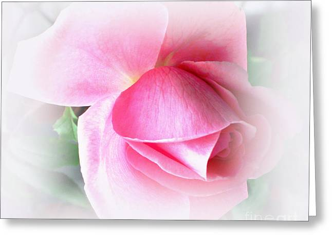 Heartfelt Pink Rose Greeting Card by Judy Palkimas