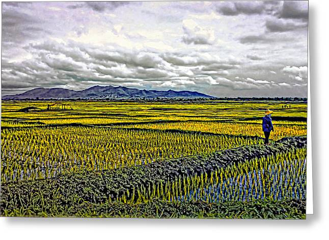 Rice Paddy Greeting Cards - Heartland Greeting Card by Steve Harrington