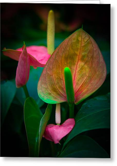 Hearts Of Joy Greeting Card by Karen Wiles