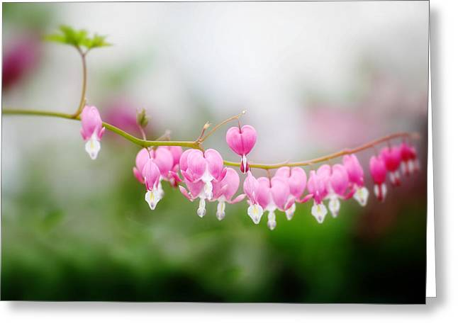 Bleeding Hearts Greeting Cards - Hearts on a Line Greeting Card by Rebecca Cozart