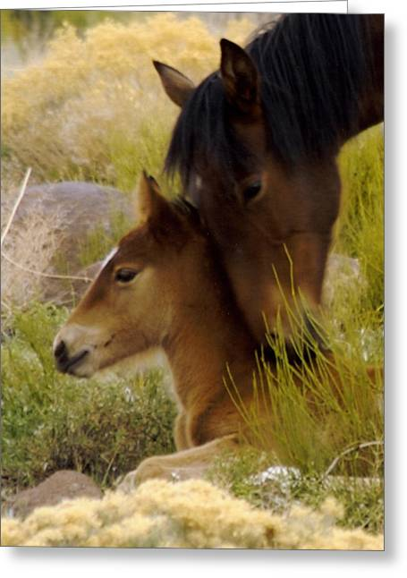 Washoe County Greeting Cards - Heartsong Greeting Card by Matthew Bailey