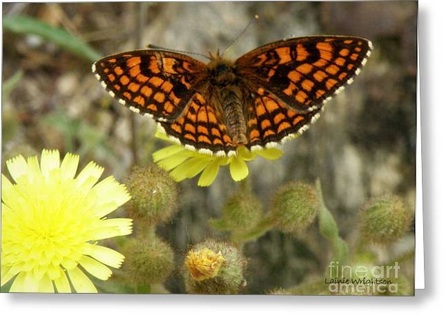 Lainie Wrightson Greeting Cards - Heath Fritillary Butterfly Greeting Card by Lainie Wrightson