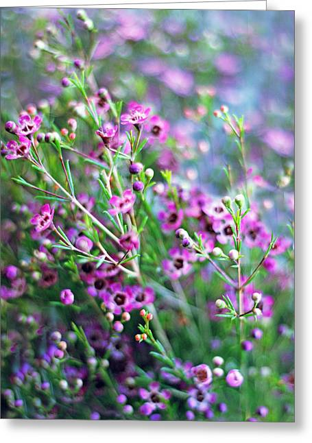 Spring Flowers Digital Art Greeting Cards - Heather Greeting Card by Jessica Jenney