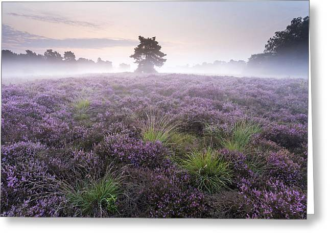 Heather With Fog Overijssel Netherlands Greeting Card by Ronald Kamphius